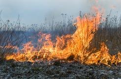 Ogień w polu Zdjęcie Stock