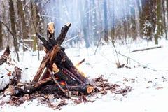 Ogień w zima lesie Obrazy Stock