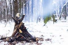 Ogień w zima lesie Zdjęcia Stock