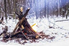 Ogień w zima lesie Zdjęcie Royalty Free