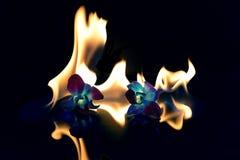 Ogieni kwiaty Fotografia Royalty Free