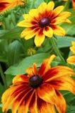 Ogieni kwiaty obrazy royalty free
