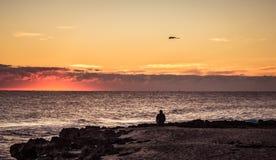 Oglądać Seagull w Golden Dawn fotografia stock
