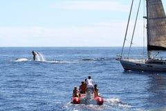 oglądanie wieloryb Obraz Royalty Free