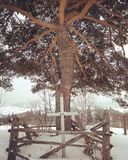 Ogni albero molto interessante fotografia stock libera da diritti