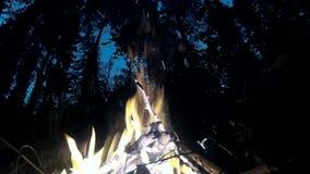 Ogniska palenie w lasowych sylwetkach drzewa w tle zbiory