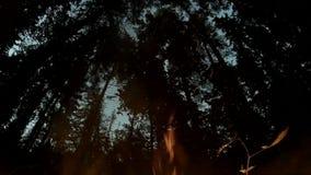 Ogniska palenie w lasowych sylwetkach drzewa w tle zbiory wideo
