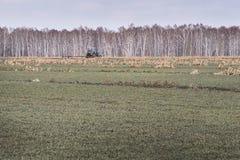 ogniska w trawę krajobrazu dużych pierwszoplanowa orientacji belalakaya Caucasus dombaj grey gór niebo Przetwarzać ziemia Zdjęcia Stock