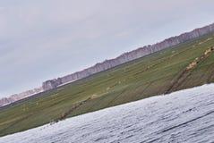 ogniska w trawę krajobrazu dużych pierwszoplanowa orientacji Jezioro Chmurna pogoda szarość kolory Fotografia Royalty Free