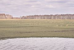 ogniska w trawę krajobrazu dużych pierwszoplanowa orientacji szarość kolory Jezioro Chmurna pogoda Zdjęcie Royalty Free