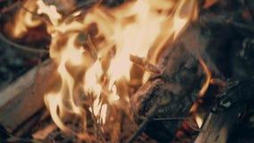 ognisko zdjęcie wideo