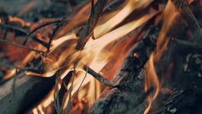 ognisko zbiory