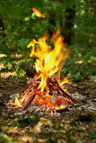Ognisko w lesie Obraz Stock
