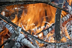 Ognisko w lesie Fotografia Stock
