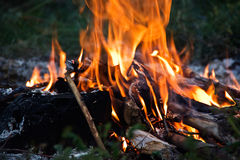 ognisty języki płomieni. Zdjęcie Stock