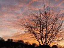 ognisty niebo Zdjęcie Stock