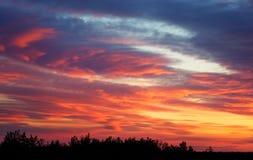 Ognisty pomarańczowy zmierzchu niebo, drzewa i Obraz Stock