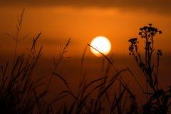 Ognisty zmierzch z sylwetką łąkowa trawa Zdjęcia Stock