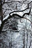 Ogołaca gałąź w zimie Fotografia Royalty Free