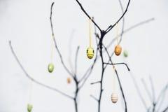 Ogołaca gałąź z kolorowymi Wielkanocnymi dekoracj jajkami Fotografia Royalty Free