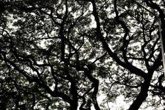 ogołaca sylwetki drzewa fotografia stock