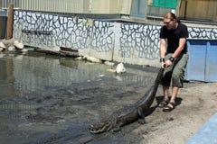 ogon aligatora fotografia royalty free