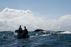 Ogon humpback wieloryb i turystyczna łódź w Samana, Dominikański ryps Obrazy Stock