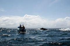 Ogon humpback wieloryb i turystyczna łódź w Samana, Dominikański ryps Obraz Stock