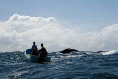 Ogon humpback wieloryb i turystyczna łódź w Samana, Dominikański ryps Fotografia Royalty Free