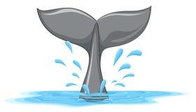 Ogon wieloryb ilustracji