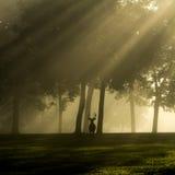 Ogoniasta jelenia samiec na mgłowym ranku Zdjęcia Stock