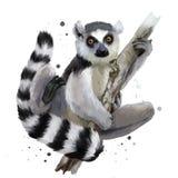 Ogoniasty lemur ilustracja wektor