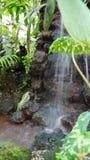 ogródu botanicznego Munich bavaria zdjęcia royalty free