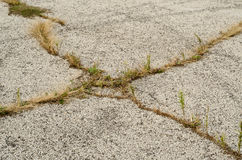 Ogräs i asfalt Arkivfoto