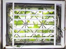 Ogräs in i huset Till och med mellanrummet för glass fönster arkivbilder