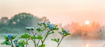 Ogräs i soluppgången Royaltyfria Foton