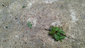 Ogräs i spricka av golvet royaltyfri foto