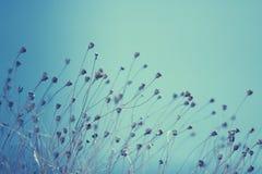 Ogräs i vår Royaltyfria Bilder
