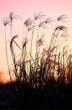 Ogräs som blåser i vinden Royaltyfri Foto