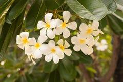 Ogródów kwiatów kwiat w ogródzie Obraz Royalty Free