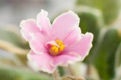 Ogródów kwiaty Zdjęcia Stock