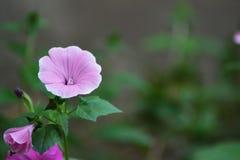 Ogródów kwiaty 1 Fotografia Royalty Free