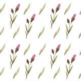 Ogródów kwiaty petunia zdjęcia stock