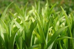 ogródów liść Zdjęcia Stock