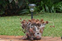 Ogródów smaki zdjęcie royalty free