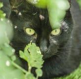 Ogród - śliczny kot w świetle słonecznym Zdjęcia Stock