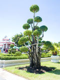 Ogród. Obraz Stock