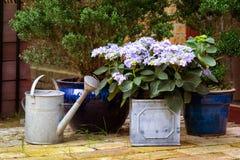 Ogród Zdjęcia Stock