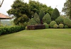 Ogród Fotografia Stock