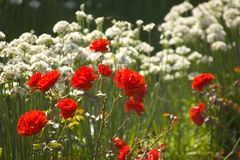 ogród anglii ogrody ekologiczne Warwickshire ryton Middlands Obrazy Royalty Free
